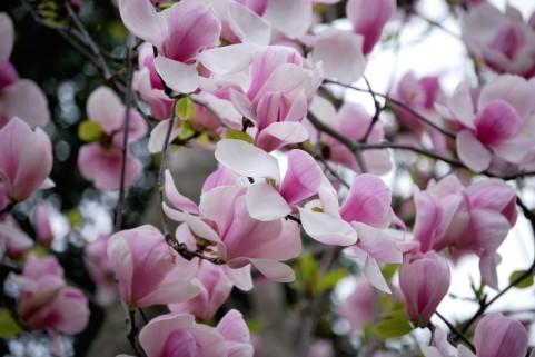 春の花003.jpg