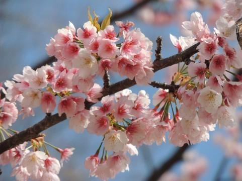 春の花004.jpg