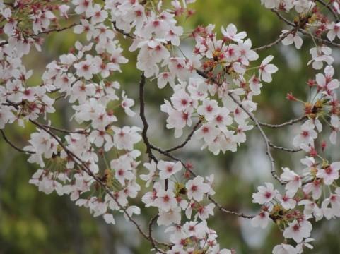 春の花005.jpg