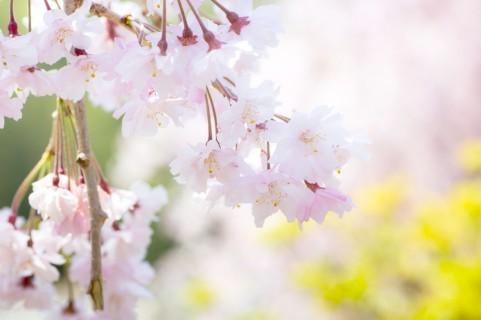 春の花006.jpg