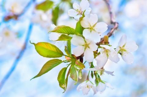 春の花007.jpg
