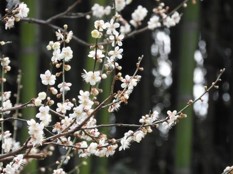 桜04.jpg