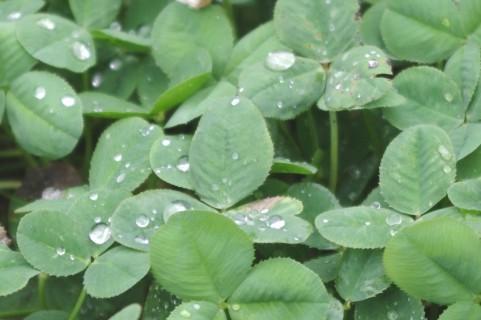 雨01.jpg