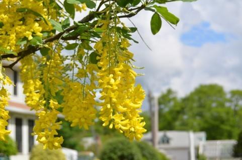 黄色01.jpg