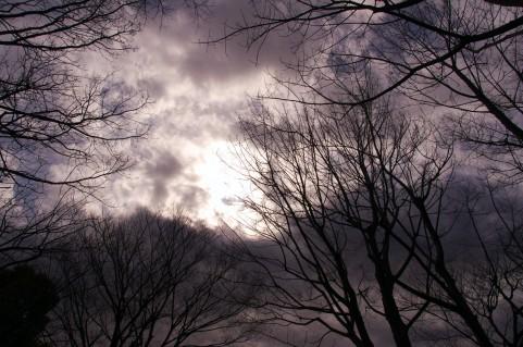arashi01.jpg